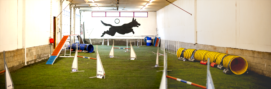 odalen agility training hall