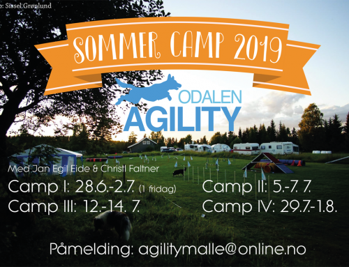 Sommer Camps 2019